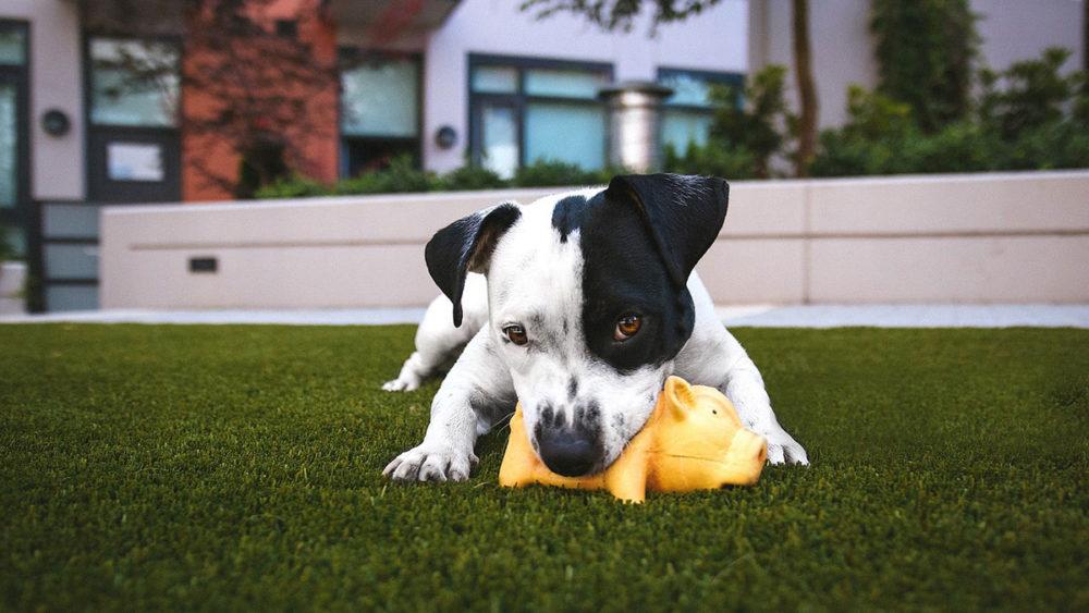 cesped artificial con mascotas